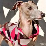 犬の採寸方法:犬服屋だから知っている大切な16のポイント!