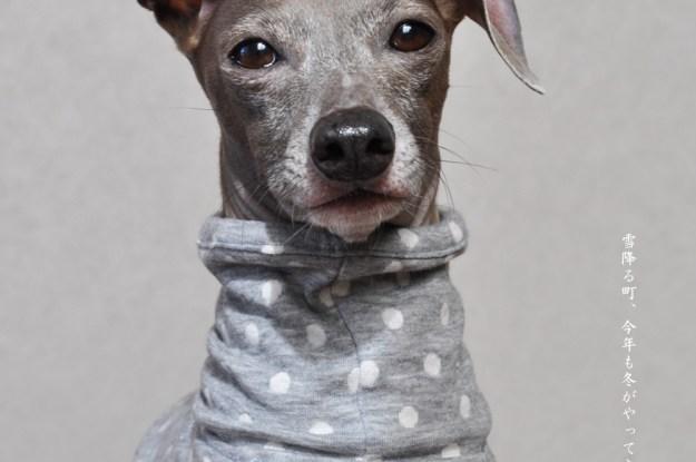 新作犬服一覧:小型犬・中型犬・大型犬に対応