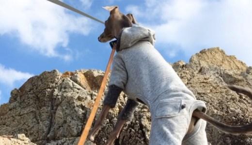 子供が崖を登ってから僕も登る。山頂からの景色壮大だ!