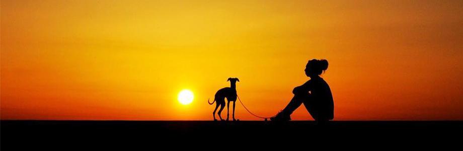 淡路島の暮らし|夫婦と犬の島歩き。