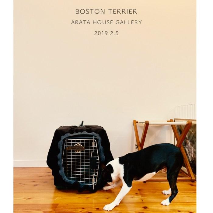 ボストン・テリアとの飛行機、車旅も暖かくて安心バリケンネルカバー