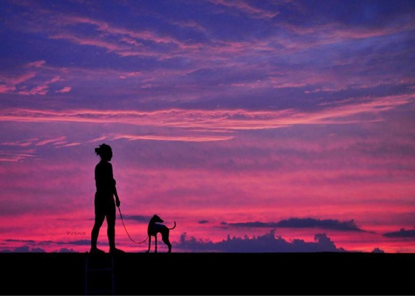 イタグレ服、ミニピン服、ウィペット服、サルーキ服、犬服・犬寝袋・雑貨の通販|Photographer s.k