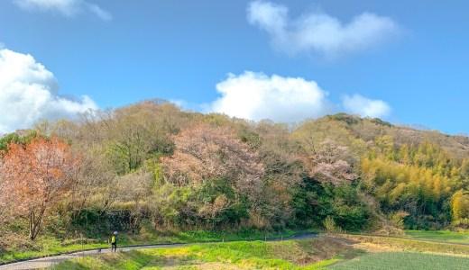 淡路島の山道を散歩すると、小鳥の鳴き声が聞こえてくる。