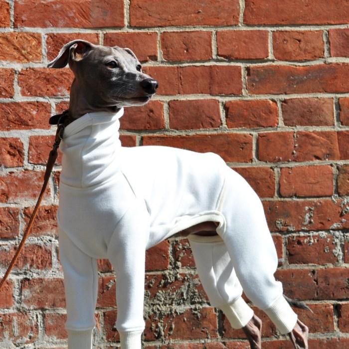 季節の犬服|イタグレ服、ミニピン服、ウィペット服、サルーキ服