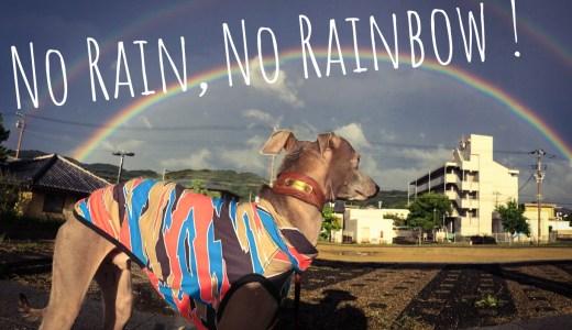 雨が降らなければ、虹はできない。