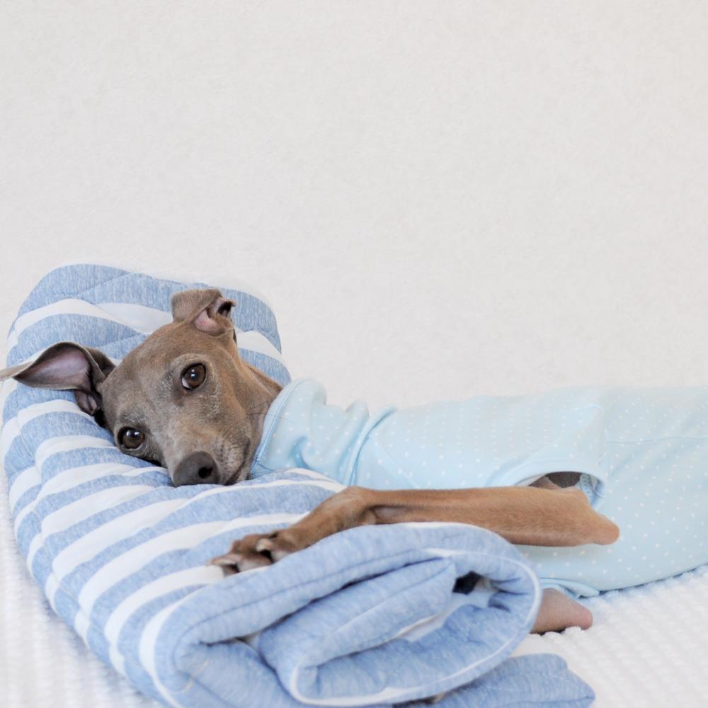 犬服ハンドメイド入門 ゼロからの犬服の作り方&ショップ運営の基礎