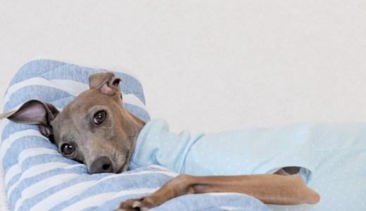 犬服ハンドメイド入門|ゼロからの犬服の作り方&ショップ運営の基礎
