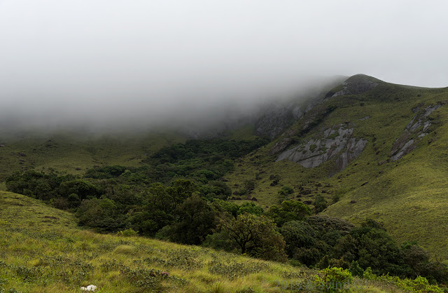 Eravikulam National Park – Home of Nilgiri Tahr