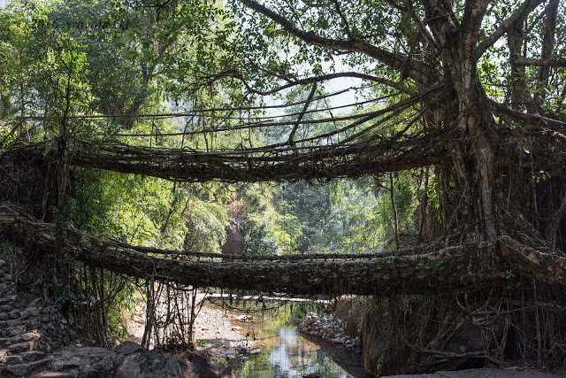 Trek to Double decker root bridge at Cherrapunji