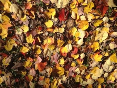 feuilles-mortes-amou
