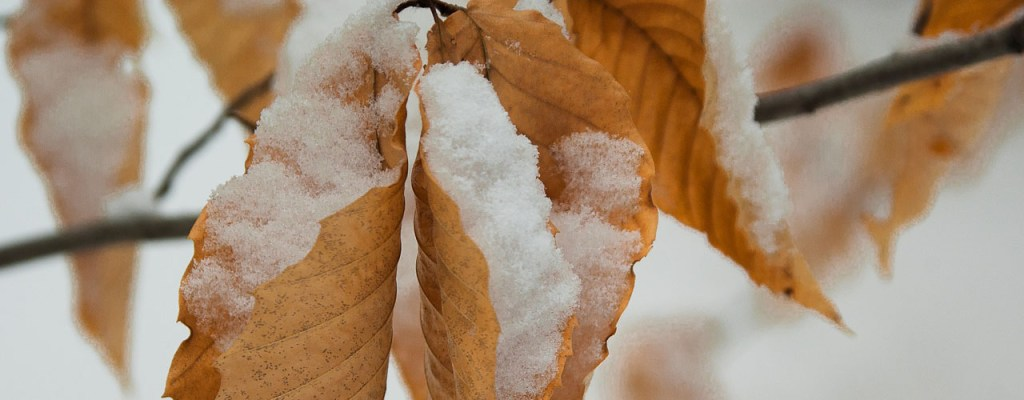 leaves winter header
