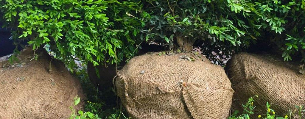 tree planting tips