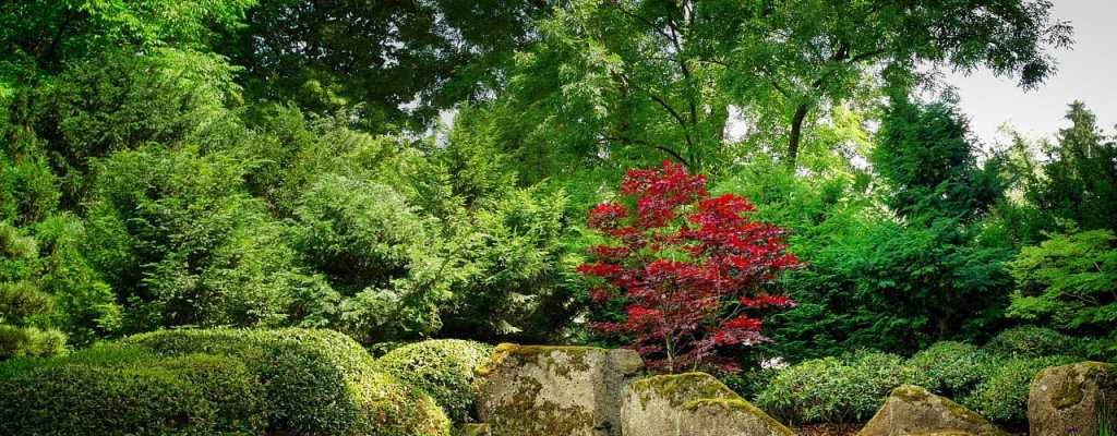 best small trees for dayton, oh