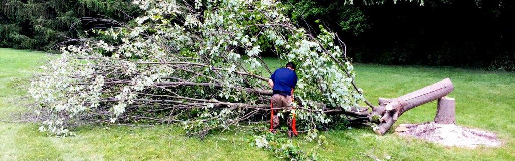 bottom-tree-removal