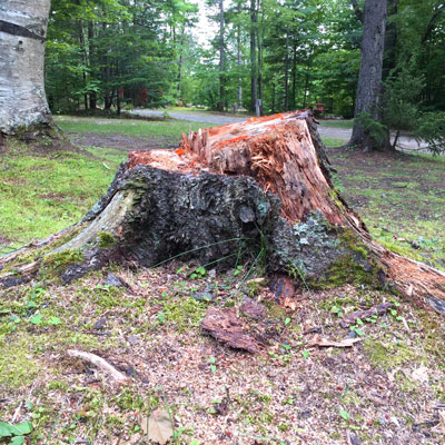 side-tree-removal