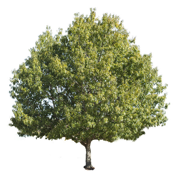 tree-isolated