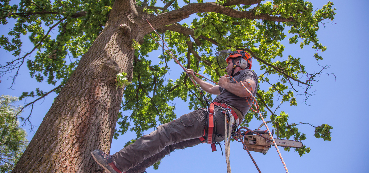 residential tree surgeon