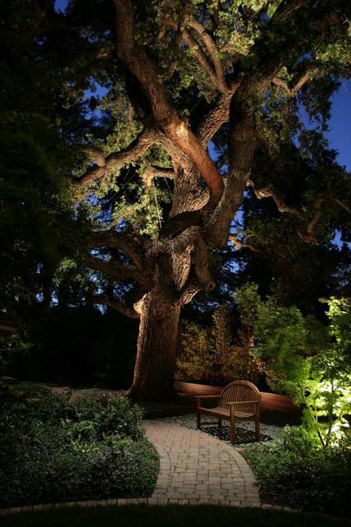tree lighting landscape lighting