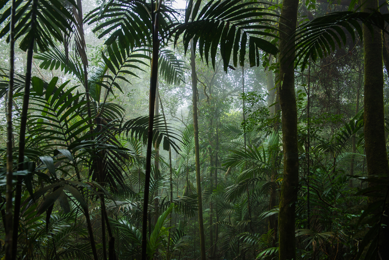 How Well Do You Know Rain Forests Quiz