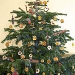 Diy Decorating An Outdoor Christmas Tree The Natural Way Arbor Day Blog