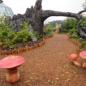 Mushroom grouping near Discovery Tree