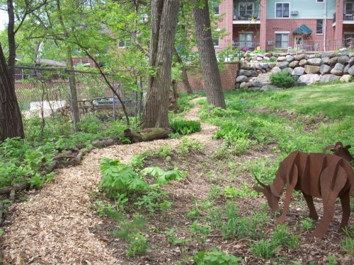 Our little urban woodland.