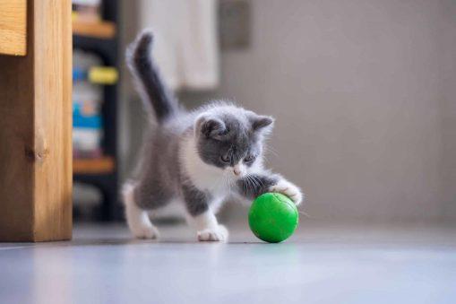 jouets-chat-arboricat