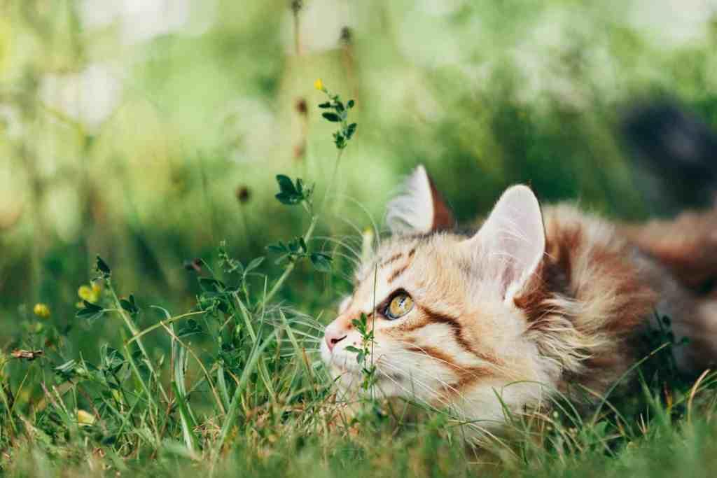 arbre-a-chat-qui-vous-ressemble
