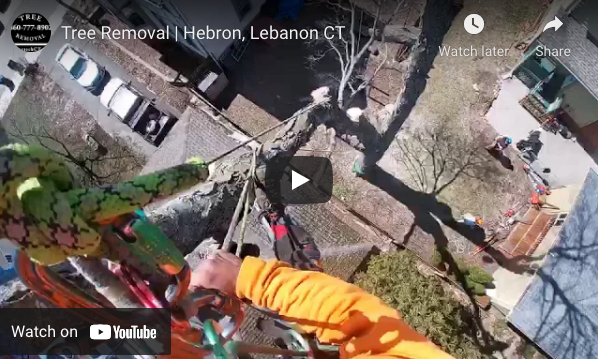 Tree Removal in Lebanon, CT Video