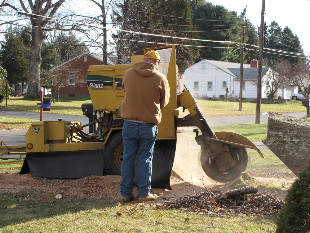 Stump Grinding CT Tree Services