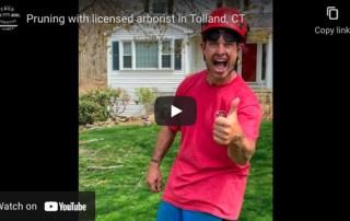 Hire a Licensed Arborist Video