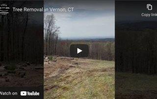 tree removal vernon ct