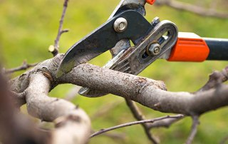 4 Warning Signs You Need Tree Trimming Services ASAP!