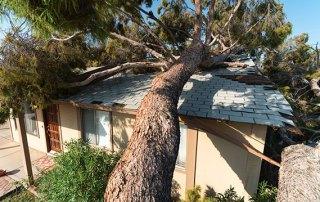 Hurricane/Storm Season and Tree Work