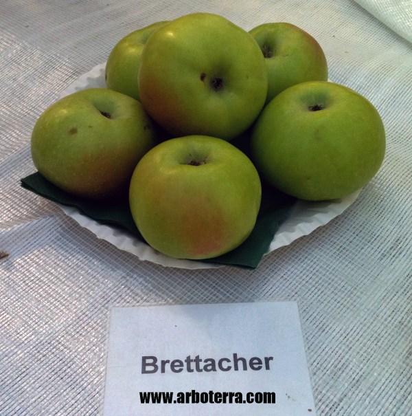 Brettacher - Apfelbaum – Alte Obstsorten Arboterra GmbH
