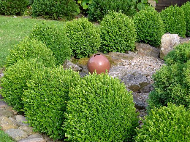20080418180738-pot-rond-buis