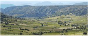 Paysage sec de vignes et de végétation méditerrannéenne