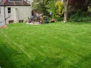 The first cut of a newly laid lawn.