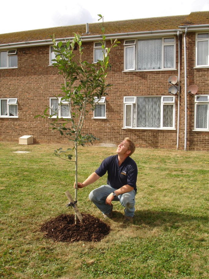 Arbworx encourages all our clients to support tree planting schemes to help lower carbon emissions and save the planet