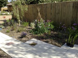 Planting out after the paving has been finished, Shoreham, Sussex