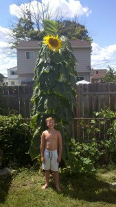 Colin Gallagher and his sunflower from Michigan, USA