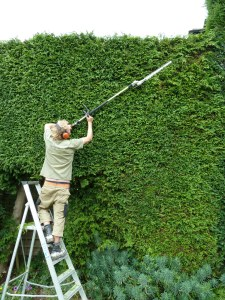 Pruning a conifer hedge at a nursing home with long reach hedge cutters