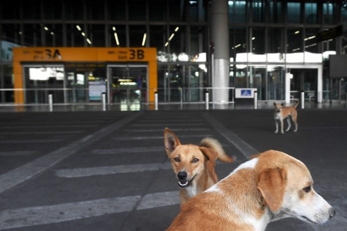 Una estación de trenes en la India, copada por los perros y vacía de personas
