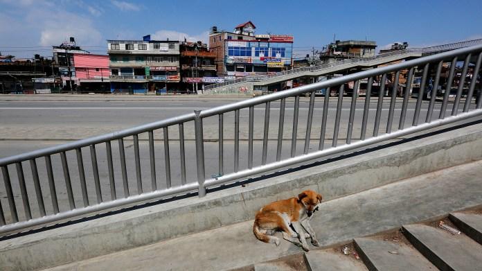 Un perro descansa en Nepal