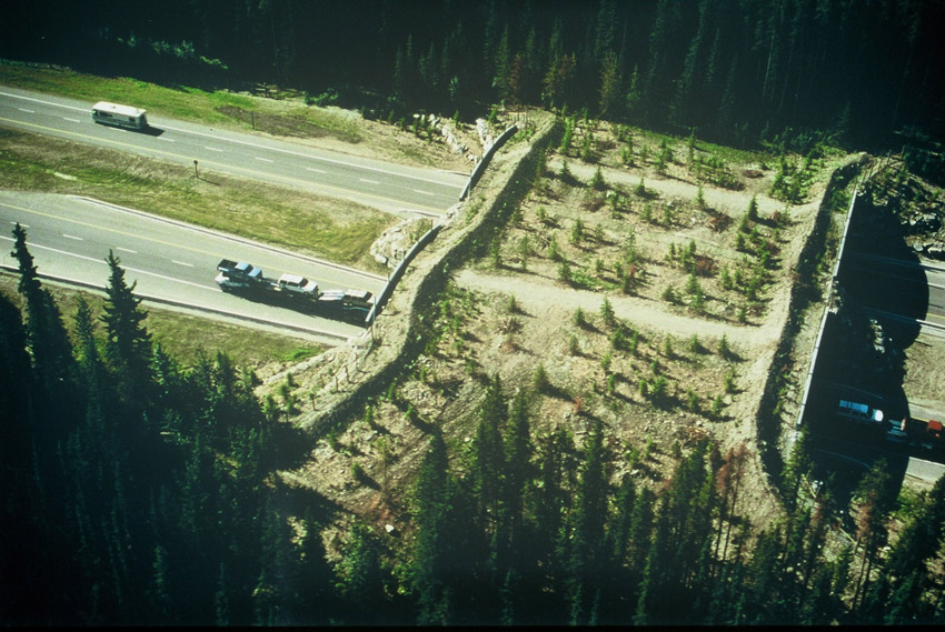 Image result for wildlife crossings Banff