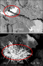 Scanning Electron Microscopy with Energy Dispersive Spectroscopy (SEM w/ EDS) imaging showing two regular morphologies for uranium-rich regions
