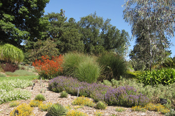 Waterwise planting design at the Royal Botanic Gardens Melbourne