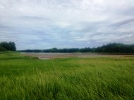 The Brae River and its lush shore
