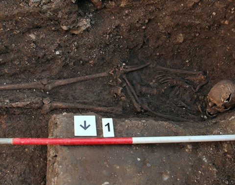 The Grey Friars skeleton, lying in situ in a hastily dug grave - now identified as the remains of Richard III, his curved spine, caused by scoliosis, can be clearly seen [University of Leicester]