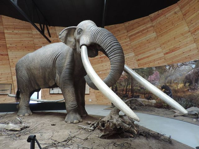 This photo shows the life-size sculpture of a mastodon from the species Anancus arvernensis in the Pliocene Park Museum in Bulgaria's Dorkovo. Photo: Spasimir, Wikipedia